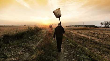 Pavese Assicurazioni - Aziende agricole